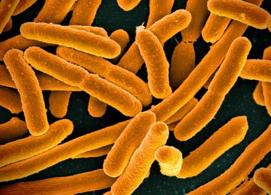 Cocktail of Common Antibiotics Can Fight Resistant E. coli