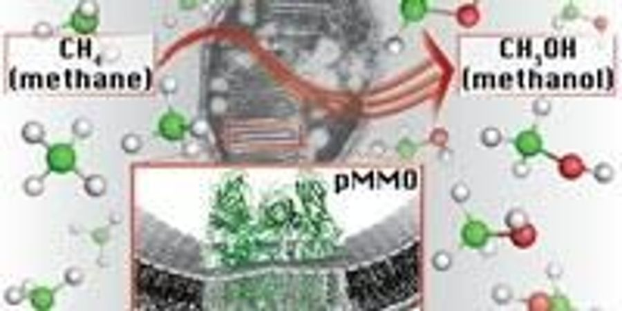 Methane-Consuming Bacteria Could Be the Future of Fuel