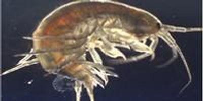 River Wildlife Contain Cocaine, Pharmaceuticals, and Pesticides