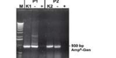 How to Solve Nucleic Acid Contamination