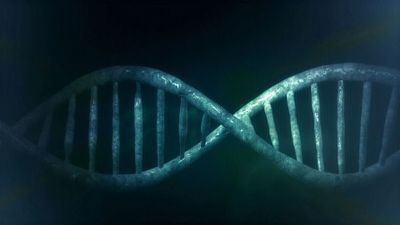 Gene Identified That Increases Risk of Antibiotic Reaction