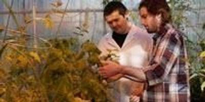 Tomato, Tomat-Oh!—Understanding Evolution to Reduce Pesticide Use