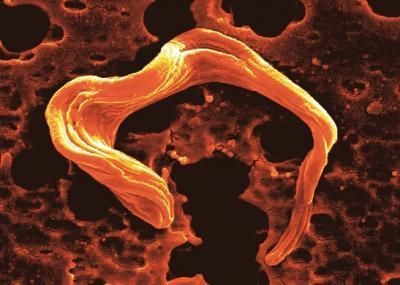 Insight into the Neglected Tropical Disease Sleeping Sickness