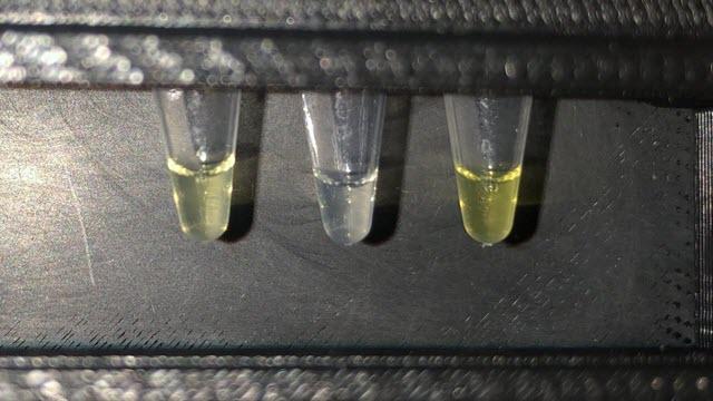 Fluoride Test