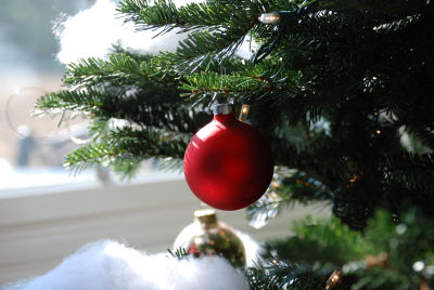 Scientists Accidentally Discover a New Threat to Christmas Trees