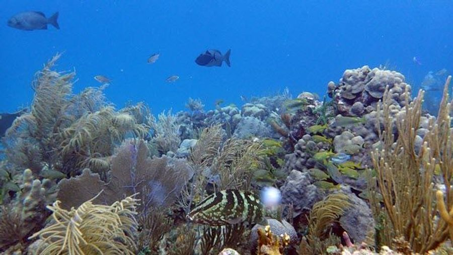 How Microbes Reflect the Health of Coral Reefs
