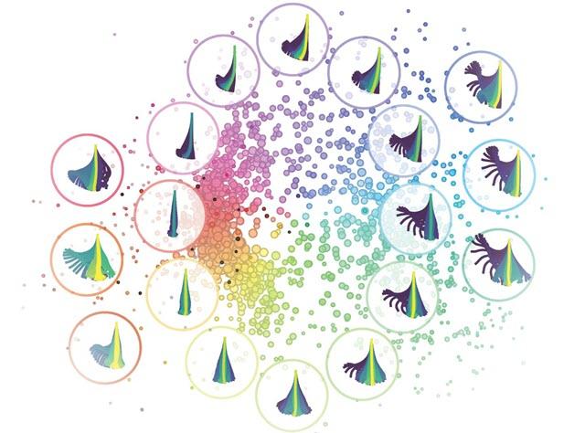 Zebrafish Larvae Motion Patterns