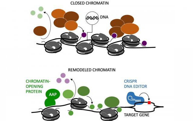 DNA is Obscured by Closed Chromatin