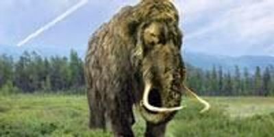 Woolly Mammoths and Neanderthals May Have Shared Genetic Traits