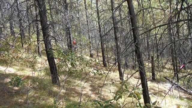 Entiat Experimental Forest