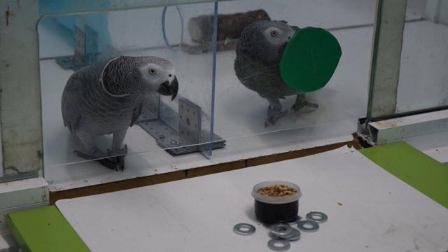 Parrot Experiment Setup