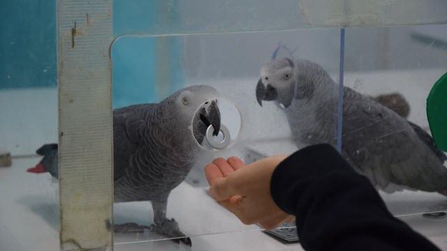 Parrot Returns Token to Researcher