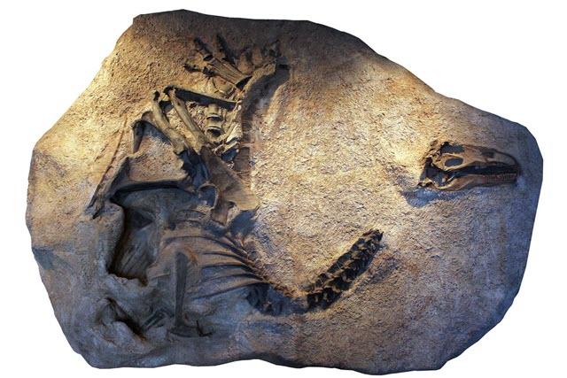 A Cast of the Skeleton and Skull of Allosaurus jimmadseni