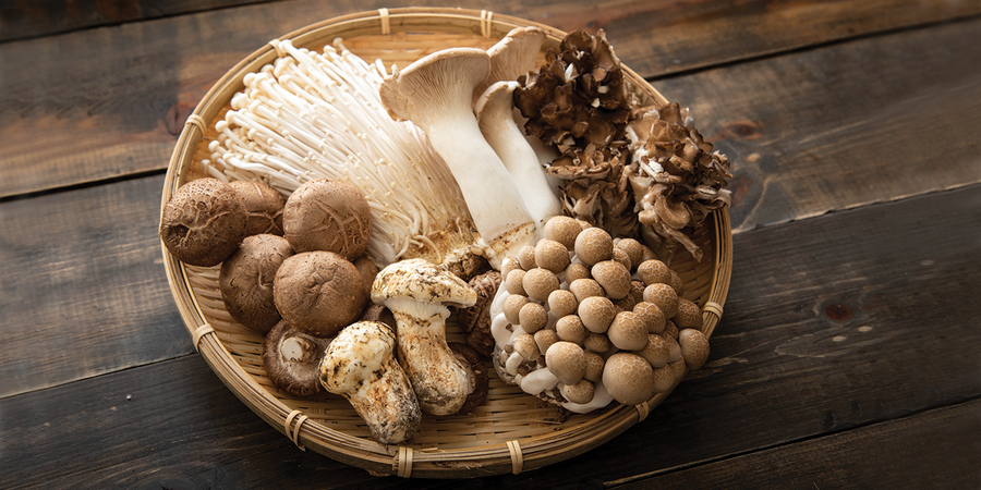 Mushrooms Are Older Than We Thought