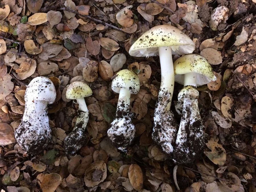 New Test Identifies Poisonous Mushrooms