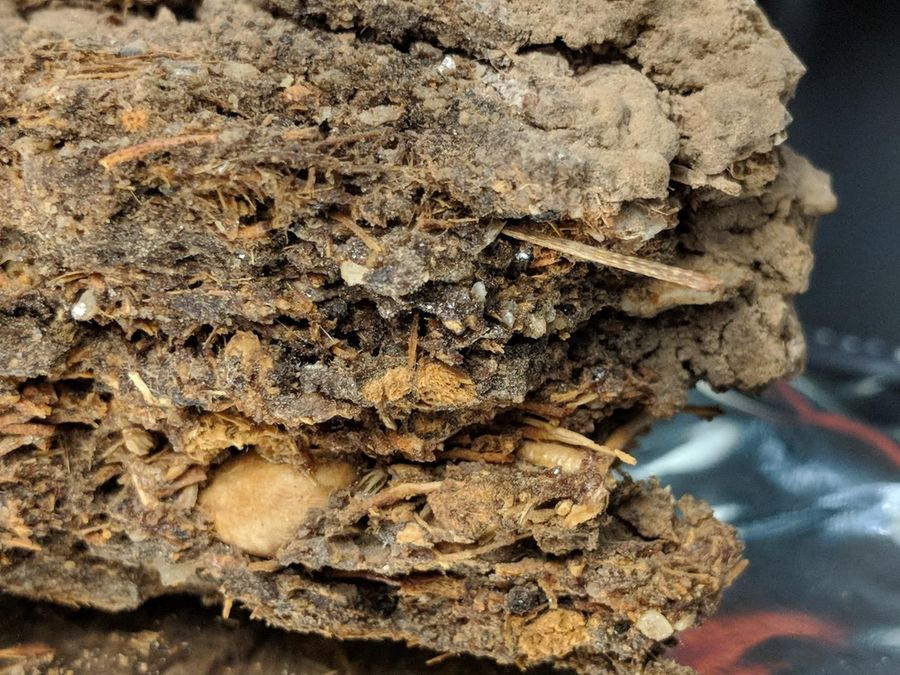 DNA from Ancient Packrat Nests Helps Unpack Earth's Past
