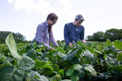 How to Boost Soybean Yields by Adapting Photosynthesis to Fleeting Shadows
