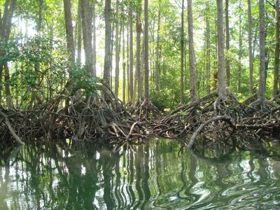 More Than 60% of Myanmar's Mangroves Have Been Deforested in the Last 20 Years