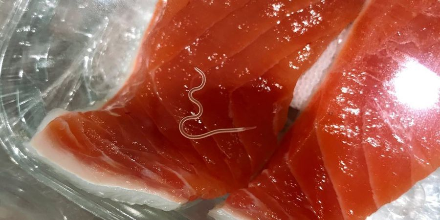 'Sushi Parasites' Have Increased 283-Fold in Past 40 Years