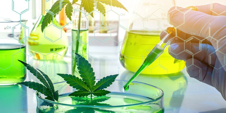 DEA Proposes Process to Expand Marijuana Research in the US