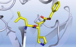 COVID-19 Drug Candidates Identified