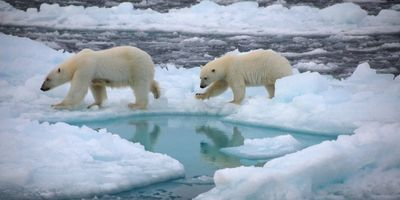 Could the North Pole Soon Be Ice Free in Summer?