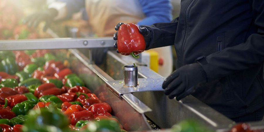 Keeping Bacteria from Cross-Contaminating Fresh Produce