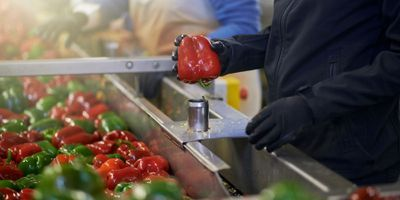 Keeping Bacteria from Cross-Contaminating Fresh Produce