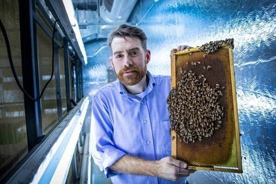Virus-Infected Bees More Likely to Access Healthy Hives