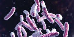 Molecular Tools for Tuberculosis Testing