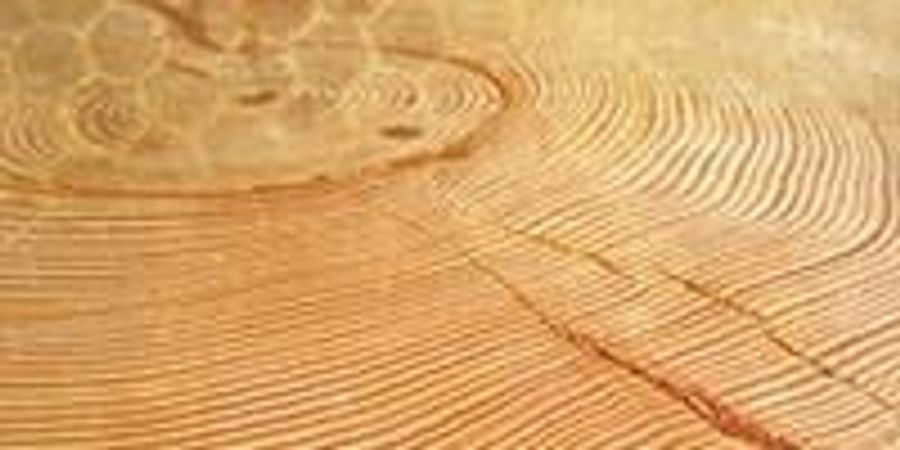 "UA's Laboratory of Tree-Ring Research Helps Decipher Earth's ""Archives"""