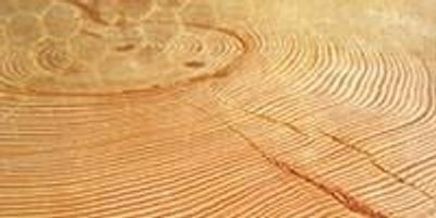 """UA's Laboratory of Tree-Ring Research Helps Decipher Earth's """"Archives"""""""