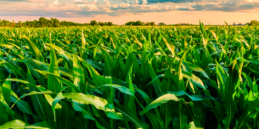 Climate Change Could Mean Corn, Soybean Production Move North