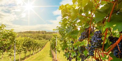New Model Gives Wineries Better Data from Existing Tests