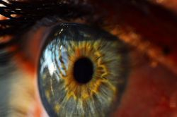 A Soft Spot for Stem Cells Helps Cornea Healing