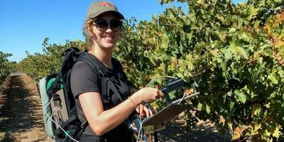 Grant to Support Research into Grape Downy Mildew