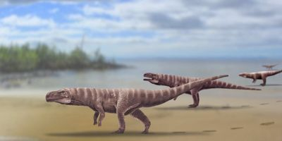 Evidence Found That Ancient Crocodiles Walked on Two Legs
