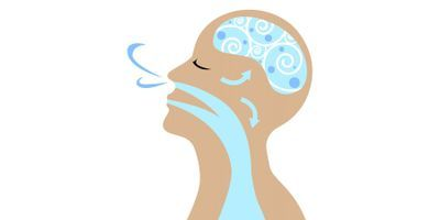 Study: How the Brain Organizes Information about Odors