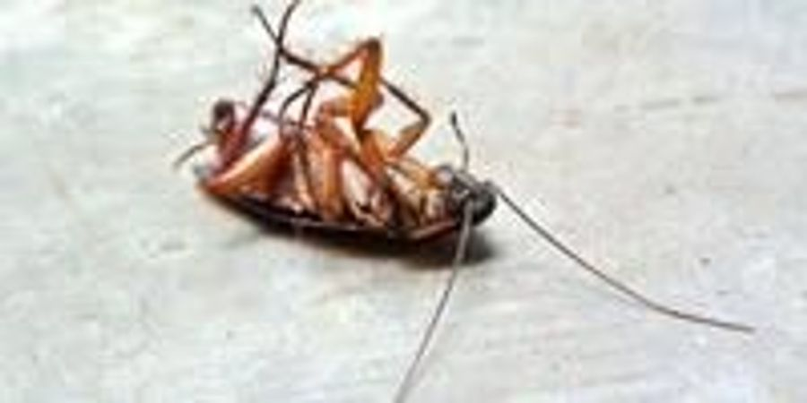 Would Cockroaches Really Survive a Nuclear Apocalypse?