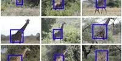 Toward Automated Animal Identification in Wildlife Research