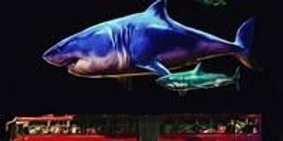 Research Shows What It Takes to Be a Giant Shark