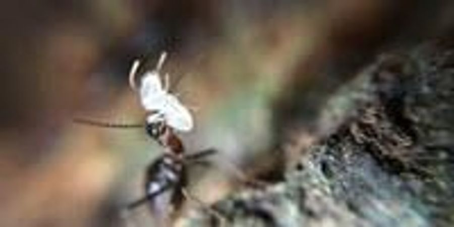 Termites Mitigate Effects of Drought in Tropical Rainforests