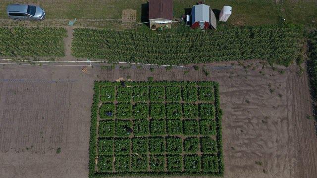 crop-yields