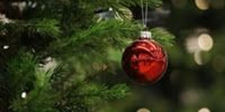 Pine Needles from Christmas Trees Could Be Turned into Paint, Food Sweeteners