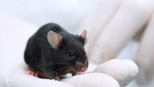 blind-mice