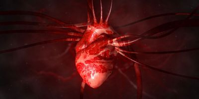 Embryonic MicroRNA Fuels Heart Cell Regeneration