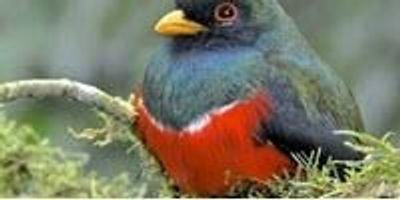 Scientists Discover How Birds, Dinosaurs Evolved to Dazzle with Colorful Displays