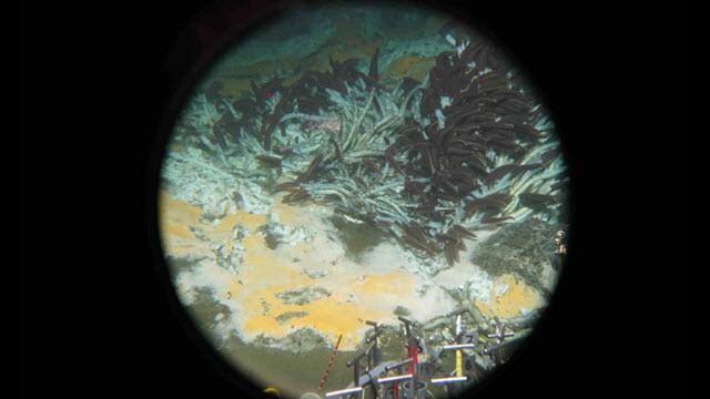 deepsea-microbes