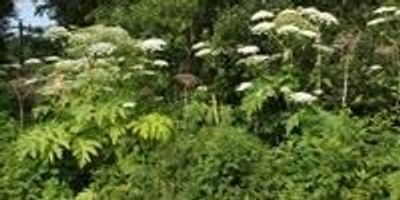 New Tool to Predict Which Plants Will Become Invasive