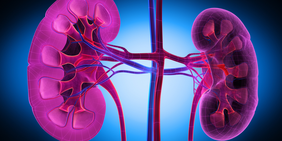 New Blood Test Can Detect Rejection by Antibodies after Kidney Transplant